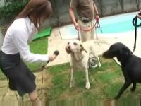 Asian reporter interviewed two dogs and gave pussy to them