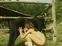 Black steed stays still and enjoys pleasant blowjob