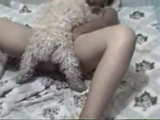 Curly domestic pet got on top of his mistress and fucked her